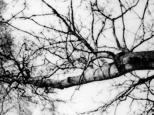grayscale-photography-of-tree-3477855 300×225