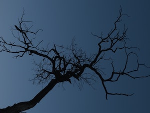 low-angle-shot-of-a-tree-bare-of-leaves-3183681 300×225
